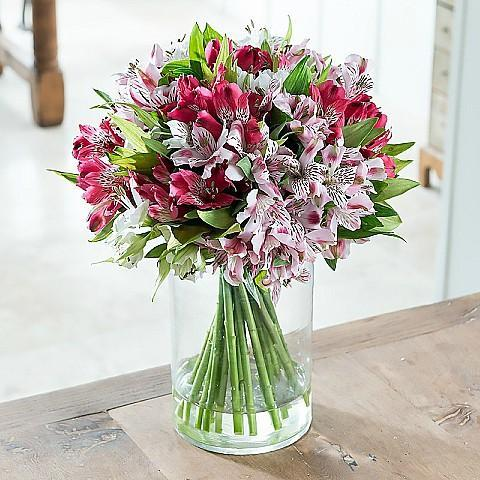 Bright and Beautiful Alstroemeria