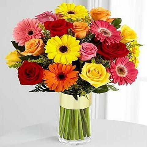 Colorful Gerbera Rose