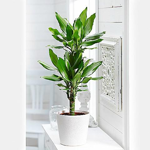 send house plants online