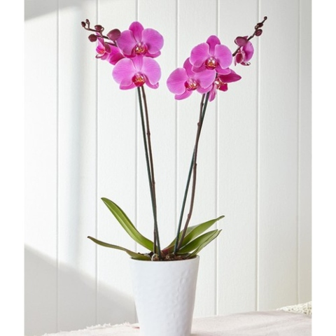 send indoor plants online