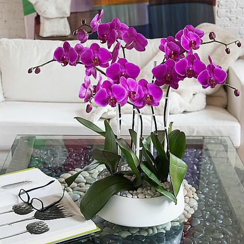 orchid plant delivery same day