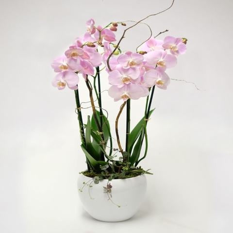pink orchid delivery