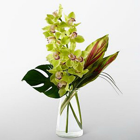 Single Green Cymbidium Orchid Delivery